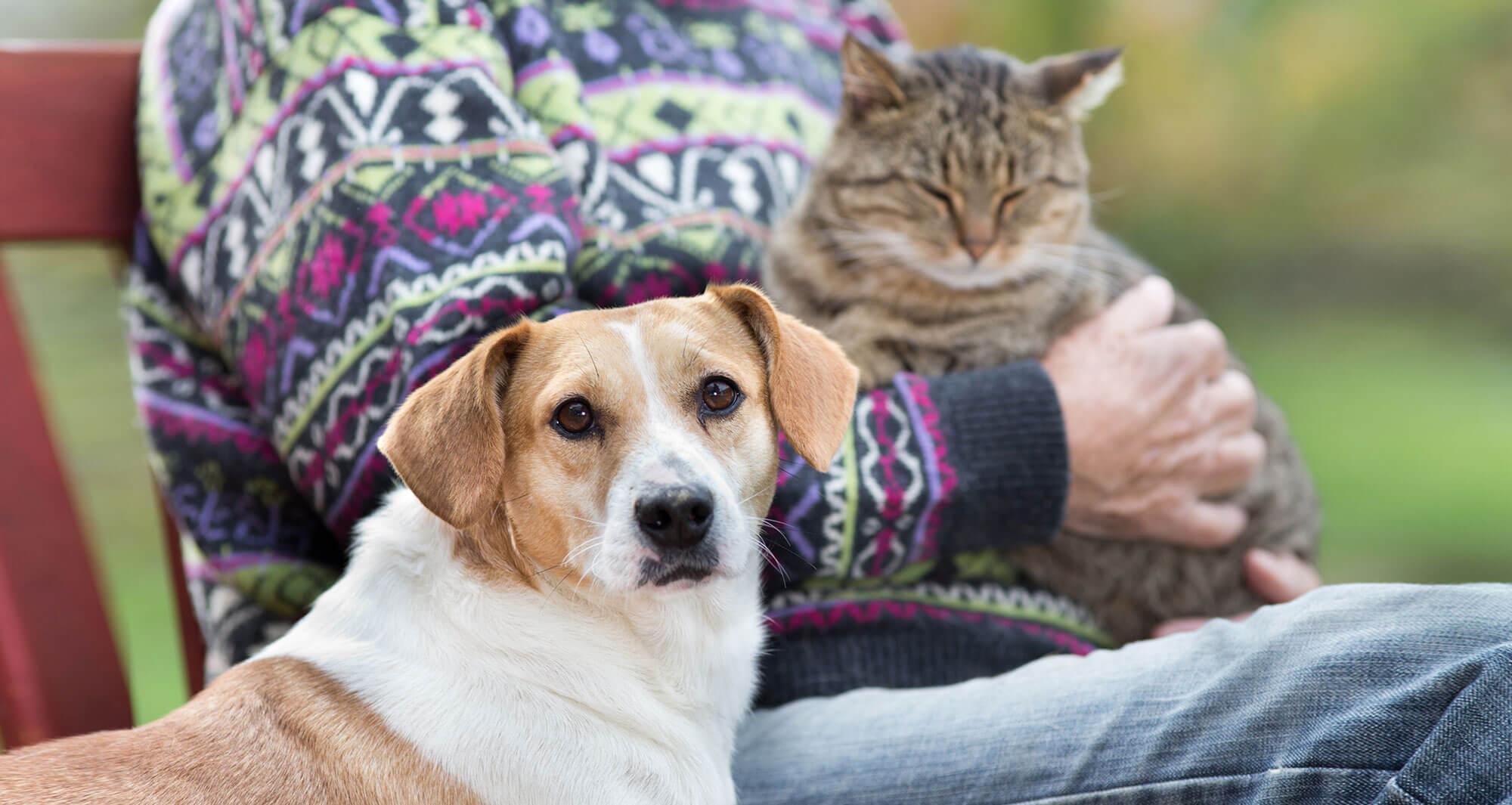 Begleittier in der Therapie, Foto: Budimir Jevtic, shutterstock.com